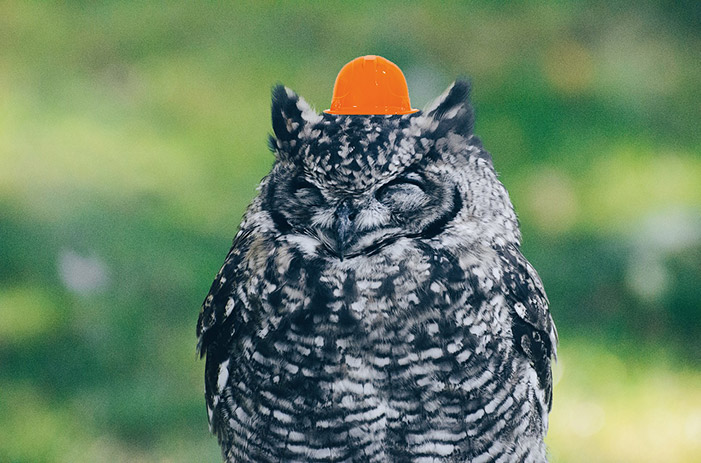 An owl with a hard hat
