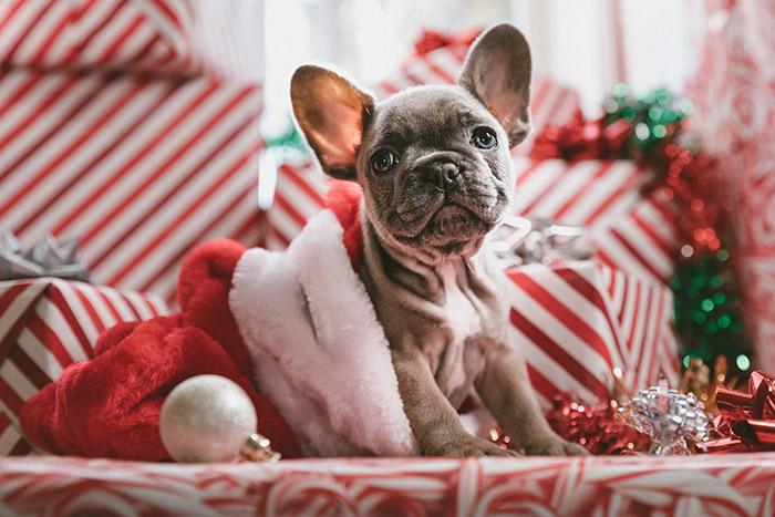 christmas sale dog in santa hat